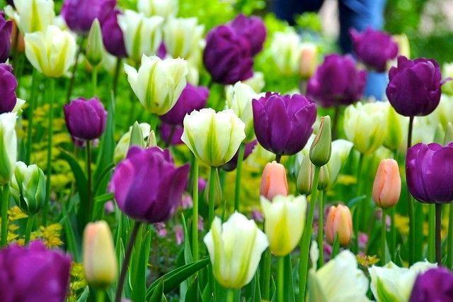 Классический Сад by Gardenia