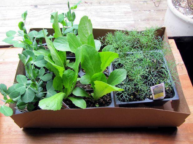 Сад Spring seedlings