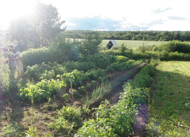 Классический Сад My Vegetable Garden